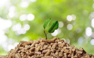 ¿Qué momento está viviendo la biomasa en España?